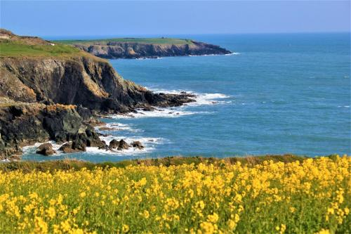 3rd - Brian Jacob - Spring on the Copper Coast